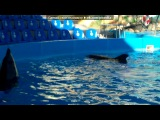 «♥♥♥Ангелюша♥♥♥» под музыку Света - Синеглазые дельфины. Picrolla