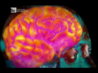 Discovery science. наше тело: уникальная машина: мозг / discovery science. human body. ultimate machine (2013) | karrab.ru