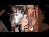 для натусика под музыку Детские песни - Смешная песенка про кота. Picrolla