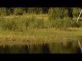 Сибирская кабарга