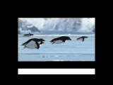 Nice Little Penguins - Flying