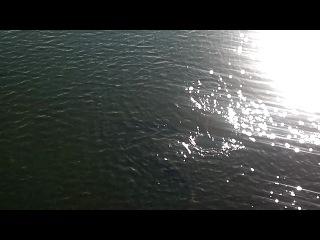 Рыба на ЧАЭС 16.09.2012 Припять, Чернобыль видео