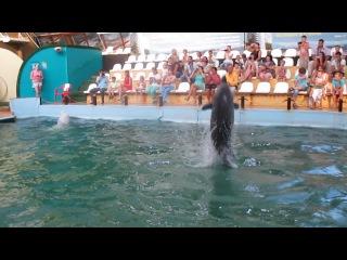 Танцующие дельфины Ростовский дельфинарий