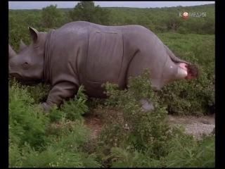 Эйс Вентура 2 Когда зовёт природа (1995).Джим Кери. 157021