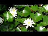 видео под музыку Венгерский народный танец - Cs