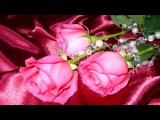 В краю прозрачных роз (Фристайл)