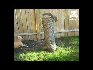 ЗАБАВНОЕ: белка играет с собакой