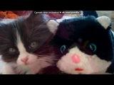 Мой котик (породаНорвежский длинношёрстный лесной кот) под музыку Кристина Орбакайте - Солнце. Picrolla