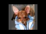 собачки под музыку Тяжёлый басс - тяжелые басы Для загрузки воспользуйтесь ссылкой -----&gt&gt&gt&gt&gt&gt D2FFE6B8EBFBE9+E1E0F1F1.html. Picrolla