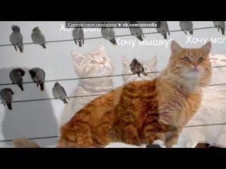 «коты» под музыку кис мяу - ты мой миленький, хорошенький, мой котик,положу тебе сарделечку я в ротик
