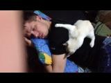 славу лижет кошка.!