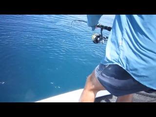 Акула нападает на пойманную рыбаками рыбу / Shark attacks fish caught by fishermen