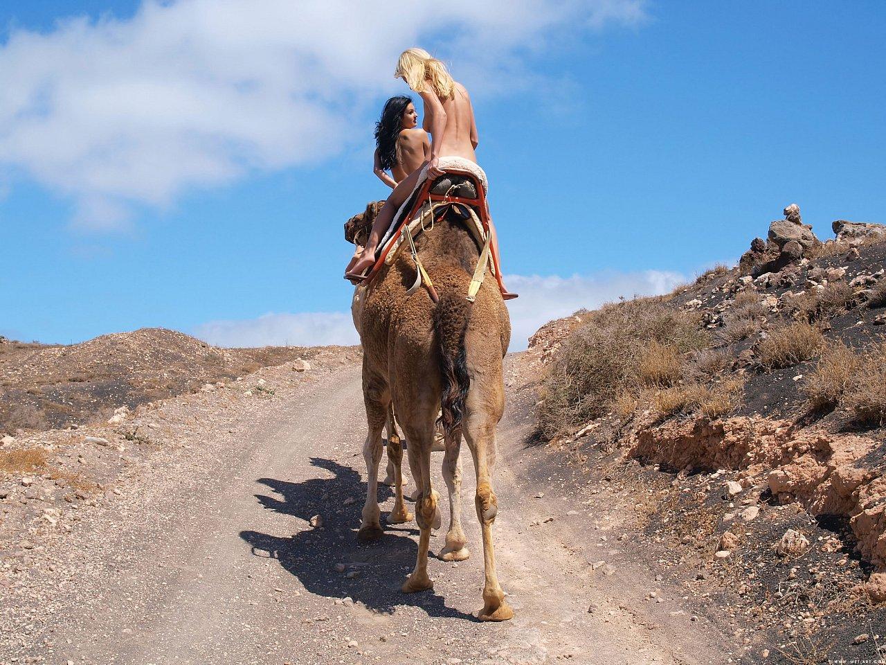 Секс с верблюдами фото 6 фотография