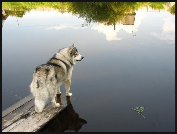 http://cs521.vkontakte.ru/u42042124/94755393/x_b0deb8d7.jpg