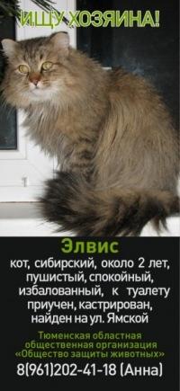 Анна Москвина, Тюмень