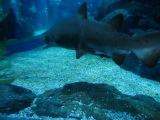 Бангкок! Самый большой океанариум в Азии!!!! Акулы каракулы)))