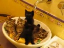 Синхронные котята