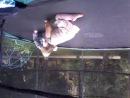 Юлёна на батуте