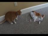 сафар бич. Suffer bitch! кот убил кота