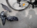 Борзый голубь