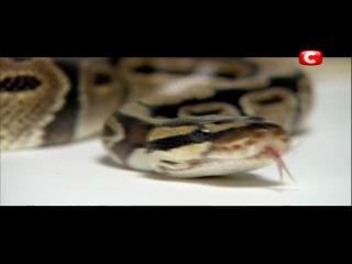 Кулинарная династия 2 сезон 2 выпуск 21 02 2013 смотреть онлайн Кулінарна династія 2 СТБ