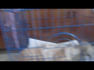 Маня и новый котик Саламон после операций. 08.02.14