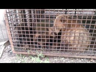 Медвежата угарают с пистуном=)