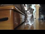 Кот котик смешно прикол охотник забавно мило игры с котом )