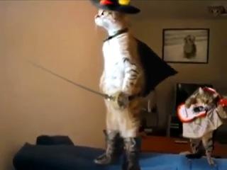 Кот (в сапогах, шляпе) стоит на задних лапах. Пародия. сзади играет мелкий кот на гитаре
