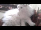 С моей стены под музыку смешная музыка про кота - очень смешная. Picrolla