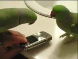 Попугаи разговаривают друг с другом))