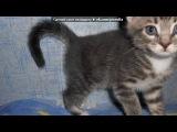 «Котята» под музыку     [❤]Кошки и коты - Кошачье мяуканье под аккорды гитары. Picrolla