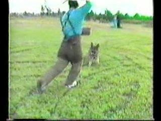 Дрессировка собак.IPO -1