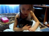 Девочка ругает собаку