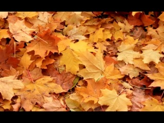 П.И.Чайковский.Времена года. Осенняя песня-октябрь
