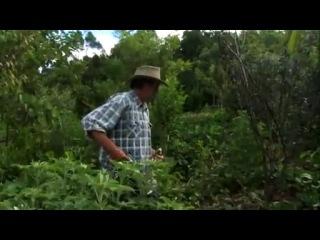 Создание пищевого леса с Джефом Лотоном (Пермакультура)