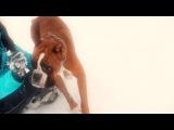 Слепой случай меняет все...(Любовь между собакой и человеком)