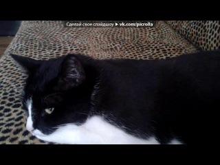 «мой кота» под музыку Смешарики - Про нашего котика))посвящается фредди крюгеру. Picrolla