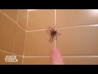 Spider TERRORIZES Man in Bath