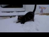 коты и собаки радуются снег