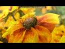 «Время года лето» под музыку Д.Харатьян - из к.ф. Гардемарины,вперед! - Как жизнь без весны.