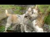 «коты о коты!!!!» под музыку mp3.riall.net - Звуки природы - Звуки дельфинов. Picrolla