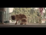 The All New 2013 Toyota Corolla - Feels Good Inside TV Commercial