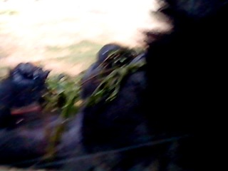 Речнуху(Максим) сдали живодёрам
