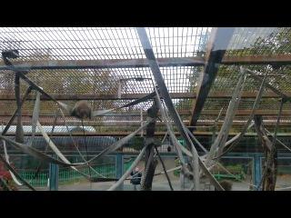 Лененградский зоопарк. Обезьяны.