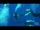 Дельфины, люди  и   акулы.