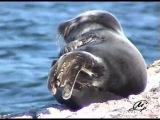 Презент с берегов Байкала. Диск №2. Флора и фауна Байкала (2008) DVDRip