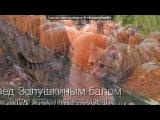«приколы с котиками» под музыку Светлана Копылова - Про КОТА. Не обижайте кошек и котов. Picrolla