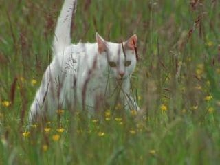 Эти загадочные кошки (BBC. The Cat Connection - 2002)