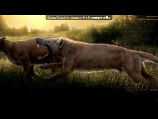 гиенодоны под музыку коты воители Белочка Я сошла с ума Picrolla